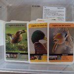 E15350 Kwartet vogels